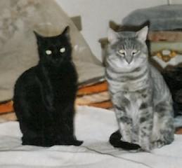Prima di tonnellate di croccantini: due gatti smilzi