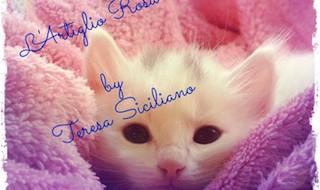 teresa-siciliano