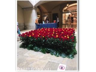 Diario di Viaggio: a Barcellona, per la Festa dei Libri e delle Rose