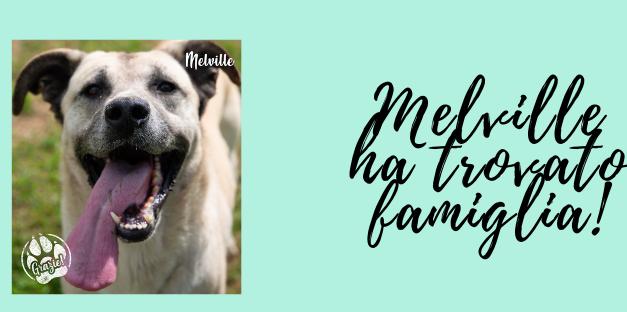 QuattroZampe: Melville ha trovato famiglia!