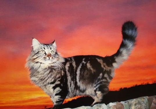 Quattrozampe: i gatti di Fianello