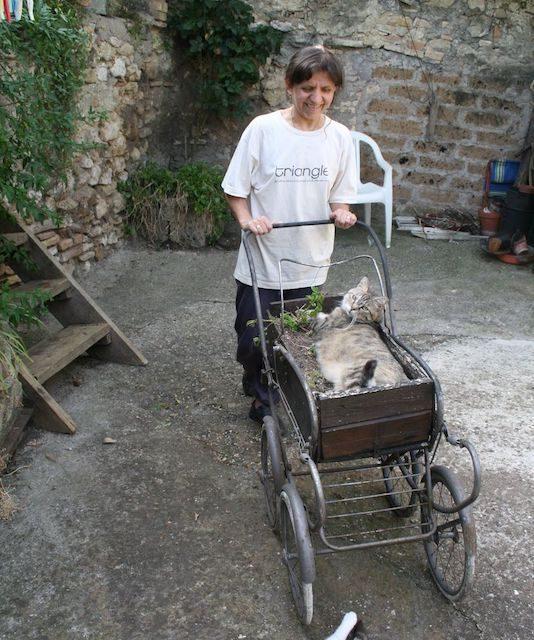 QuattroZampe: Speranza, gattina di Fianello