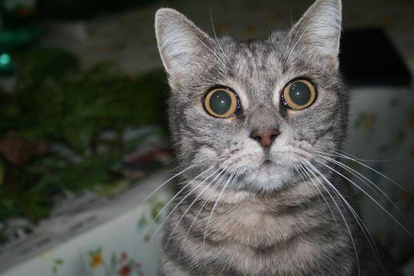 QuattroZampe: Cenerella, la gattina di Fianello